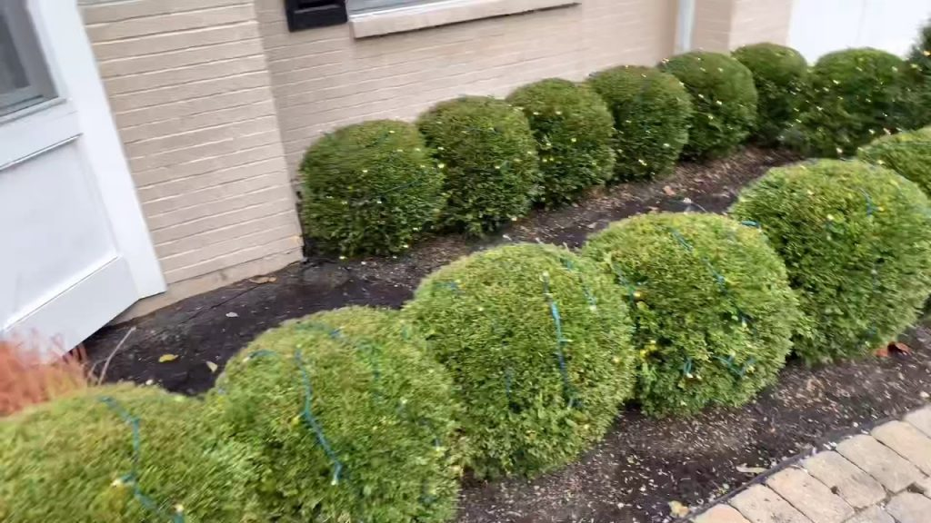 Installing Christmas Lights On Bushes And Powering Them 🎄